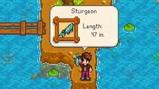 stardew valley fish pond sturgeon